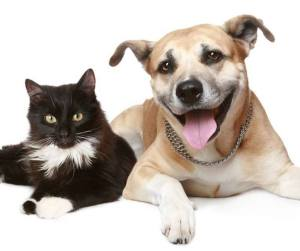 cat-and-dog-happy-square